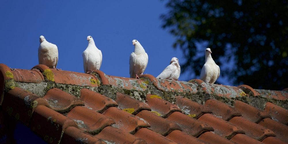 Ai nevoie de o soluție modernă de acoperiș? Alege țigla metalică de la RoofArt